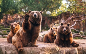 Картинка медведи, зоопарк, квартет