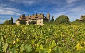 Картинка замок, Франция, виноградник, Le château de Ripaille