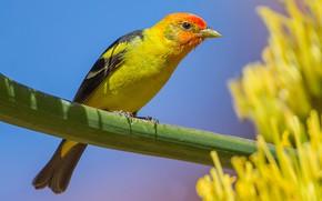 Картинка небо, птица, растение, клюв, красноголовая пиранга
