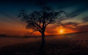 Картинка поле, небо, дерево, вечер