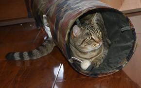 Картинка кот, домик, полосатый