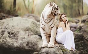 Обои азиатка, платье, сидит, дружба, девушка, настроение, тигр, белый, ситуация, природа, камни