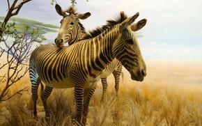 Обои зебра, Калифорнийская академия наук, Золотые ворота, Сан-Франциско, парк, животные, картина