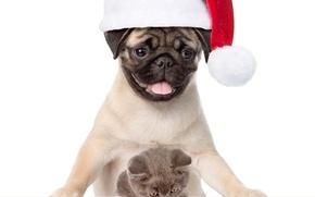Картинка котенок, собака, мопс, Новый год, Christmas, cat, dog, New Year
