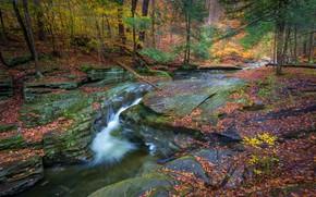 Картинка осень, лес, река, водопад, Пенсильвания, Pennsylvania, Ricketts Glen State Park, Sullivan Falls