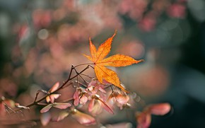 Картинка осень, фон, листок, ветка