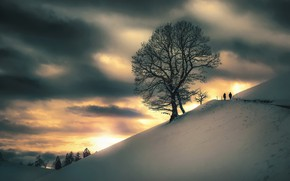 Картинка зима, закат, дерево, гора