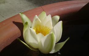 Картинка Flower, Flowers, Water
