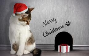 Картинка кот, подарок, нора, Рождество, Christmas, Winter, Cats