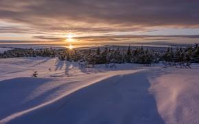 Обои природа, зима, холод, снег, свет, утро