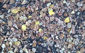Картинка wallpaper, texture, autumn, leaves, ground