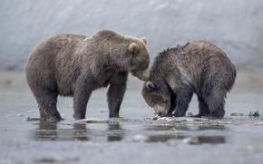 Картинка медведи, медвежонок, медведица