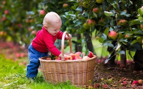Картинка радость, корзина, яблоки, ребенок, boys, child, apples, basket, wicker, мальчк