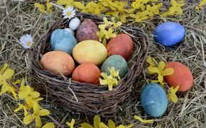 Картинка цветы, праздник, корзина, яйца, пасха, сено
