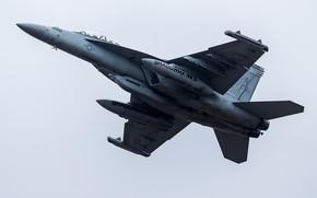 Картинка самолёт, летит, боевой, F/A-18 Super Hornet, VAQ-141