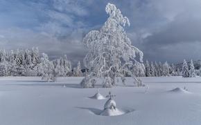 Картинка зима, снег, деревья, пейзаж, елка
