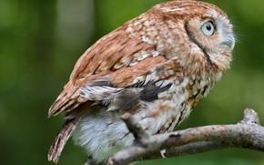 Картинка сова, птица, сидит, by Nushaa