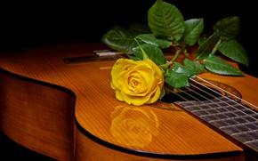 Обои роза, жёлтая роза, гитара, стиль