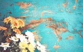 Обои flower, summer, blue, хризантемы, букет, spring, цветы, vintage