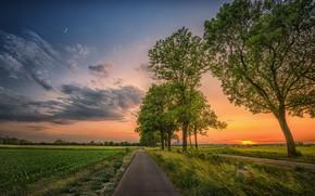Обои закат, поле, деревья, дорога