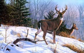 Картинка Nature, Winter, Painting, Deer