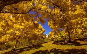 Картинка осень, листья, солнце, деревья, парк, желтые, склон