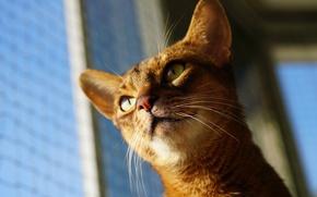 Картинка глаза, кот, усы, котейка