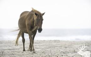 Картинка лошадь, большая, грива, окрас