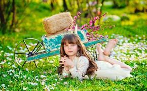 Обои сено, лето, природа, тачка, девочка, цветы