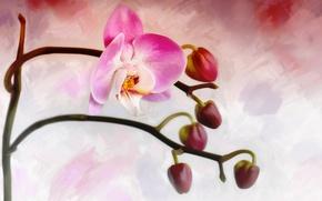 Картинка цветок, бутон, орхидея