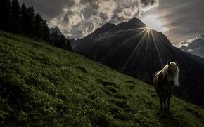 Картинка трава, деревья, горы, лошадь, утро, лучи солнца