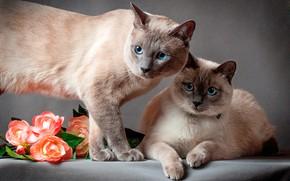 Обои кошки, коты, пара, цветы