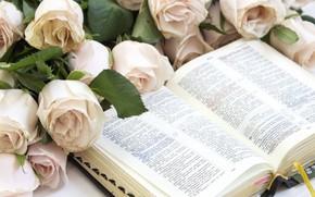 Картинка цветы, чтение, Книга, розы