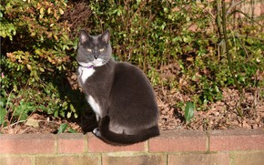 Картинка кот, взгляд, серый