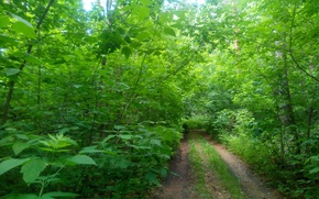 Картинка дорога, зелень, лес, лето, листья, деревья, ветки, green