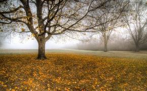 Картинка осень, листья, туман, дерево