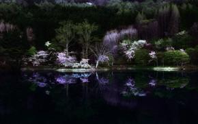 Картинка лес, ночь, природа, озеро, мрак, весна, Япония, сакура