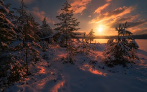 Картинка зима, лес, солнце, свет, снег, деревья, природа, Норвегия, ёлки