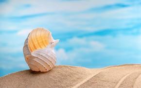 Картинка песок, море, пляж, лето, ракушки, summer, beach, sea, sand, seashells