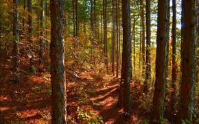 Картинка Осень, Деревья, Лес, Fall, Autumn, Forest, Trees