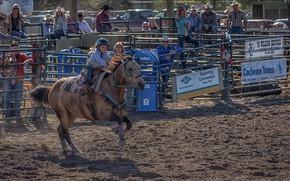 Картинка конь, девочка, родео