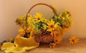 Обои золотарник, цветы, натюрморт, корзина, осень