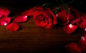 Картинка стол, роза, лепестки