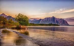 Картинка море, пляж, небо, деревья, горы, птицы, тропики, пальмы, скалы, побережье, Гавайи, США