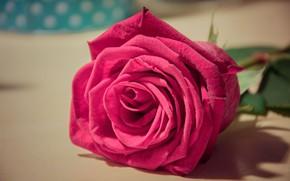 Картинка цветок, стол, розовый, роза, лежит