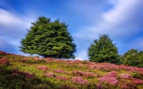 Картинка зелень, лето, небо, трава, солнце, облака, деревья, склон, холм, Нидерланды, Guelders