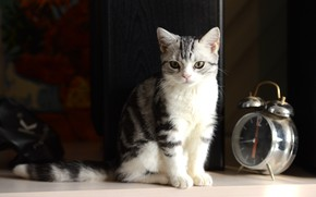 Картинка photography, kitten, Cat, bokeh, animal, clock, paws, fur, ears, whiskers, alarm clock, feline, snout