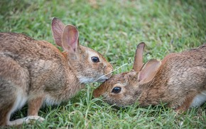 Картинка трава, пара, кролики