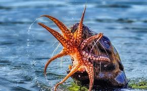 Картинка морской лев, пасть, осьминог, улов, еда, обед, море