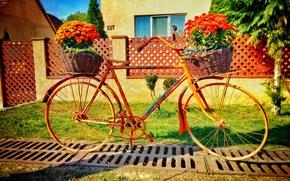 Картинка лето, цветы, велосипед